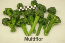 Zamrożony Multiflor